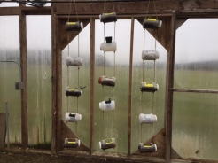 Hanging Pots from Local Harvest Dinner