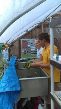 Pete and Victoria washing salad mix