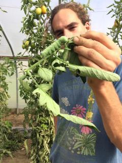 Pete & the Tomato Hornworm