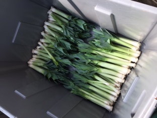 Leeks ready for delivery