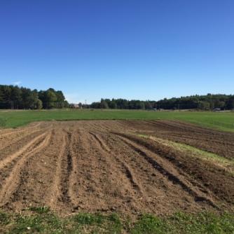 Bare field