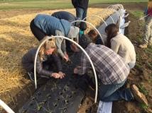 Class planting onions